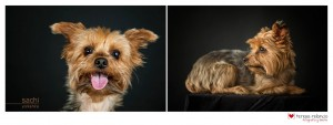foto-perro-sacha-teresa-relancio-fotografia-diseño-huesca1
