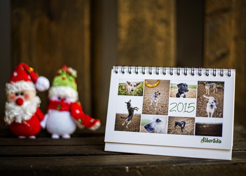 calendario-perros-teresa-relancio-fotografia-diseño-huesca-alborada-protectora-animales01