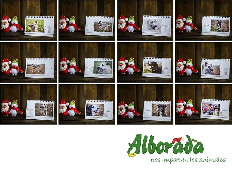calendario-perros-teresa-relancio-fotografia-diseño-huesca-alborada-protectora-animales02